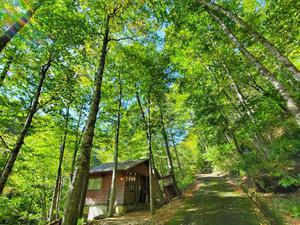 八東ふる里の森 写真