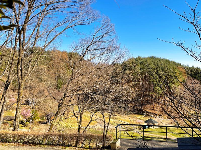 ホシフルSAUNA - 星の降る森 景色