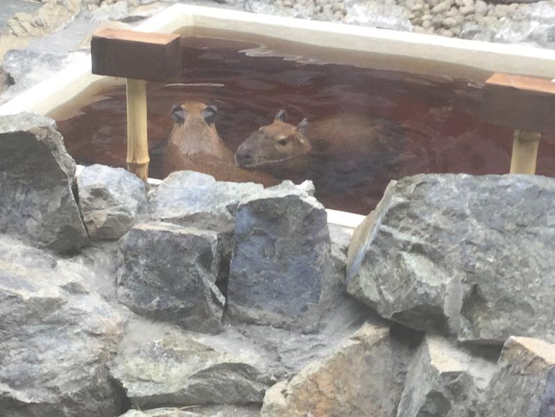 石狩天然温泉 番屋の湯 写真ギャラリー1