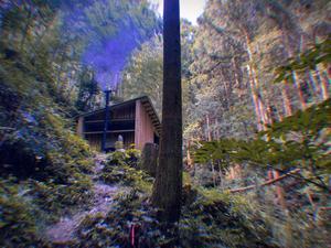 森のサウナ 写真