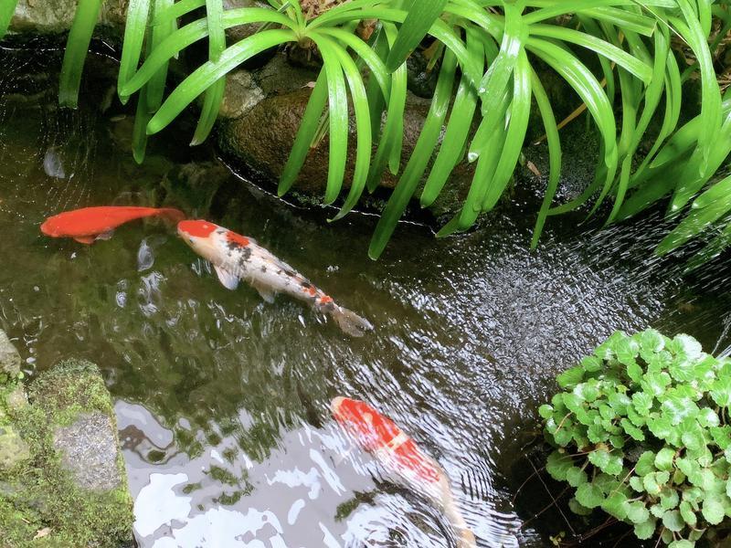 竹の湯 写真ギャラリー4
