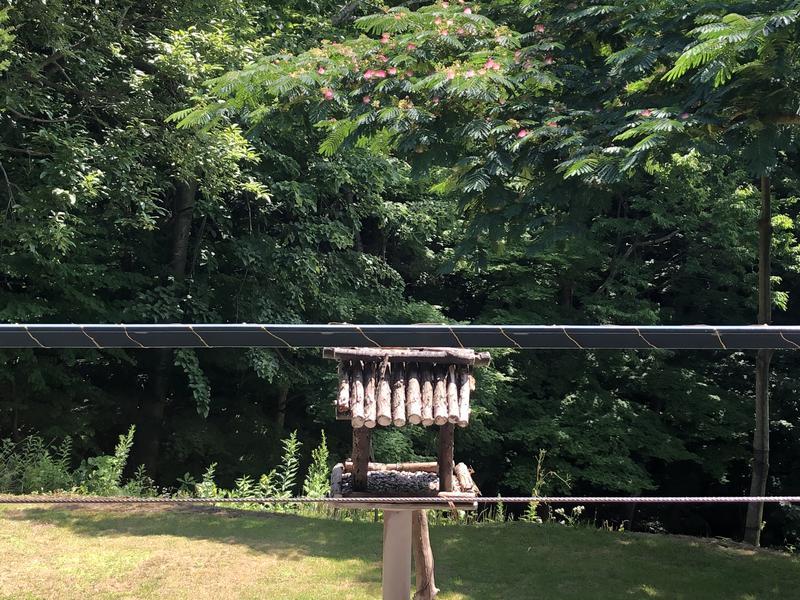 サライさんの森のゆのサ活写真