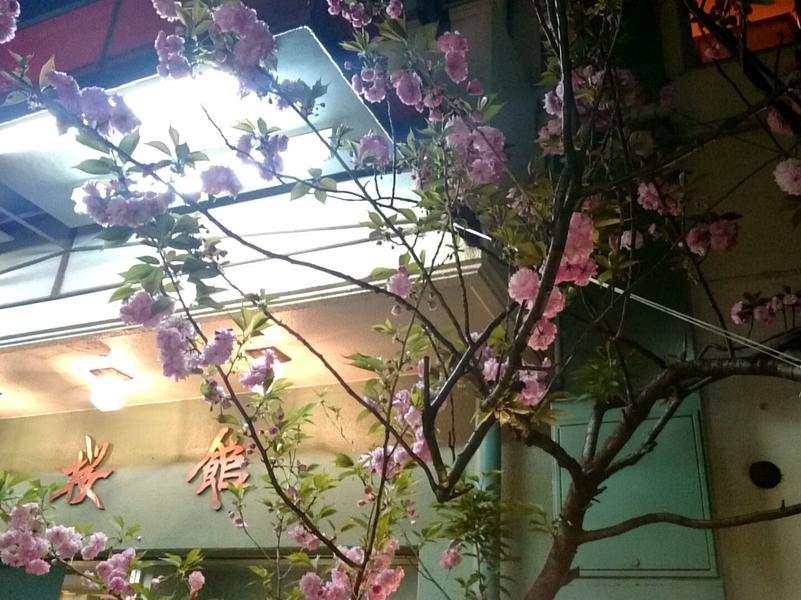 桜館 写真ギャラリー1