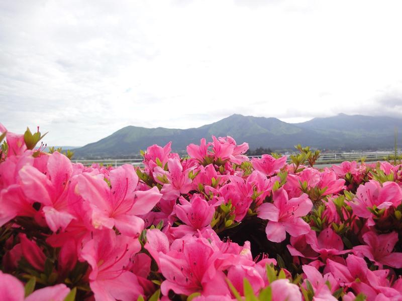 南阿蘇 久木野温泉 四季の森 写真ギャラリー9